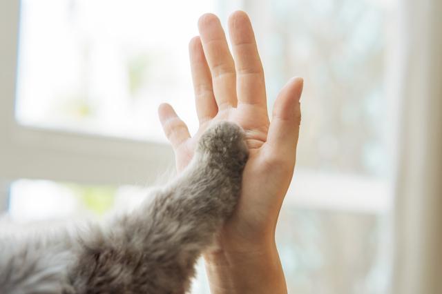 一人暮らしの大学生はペットを飼える?オススメの動物と注意点を解説!